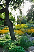 Herbaceous borders in park (Killesbergpark, Stuttgart, Germany)