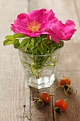 Rosehips next to wild roses in a glass of water