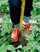 Woman gardening in red clogs