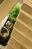 View from stairs down onto houseplant