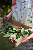 Woman holding wooden box with tulips