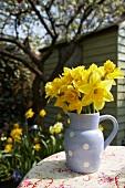 Daffodils in jug on garden table