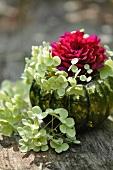 Pink dahlia & white hydrangeas in vase