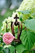 Rosen & Hortensien im Garten