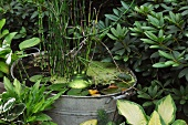 Miniature garden pond in old zinc tub