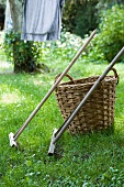 Wicker basket & wooden rakes in garden