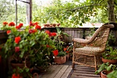 Wooden terrace with wicker armchair and various potted plants