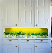 White kitchen buffet with herb pots in a niche in front of a green wall