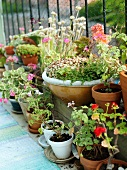 Assorted flower pots with blooming plants on a balcony