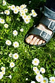 A foot in a meadow with daisies
