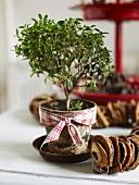 Topfpflanze und Kette aus Trockenfrüchten