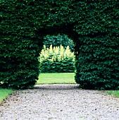 Doorway in a garden hedge
