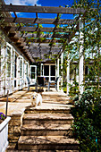 Pergola with climbers above sunny terrace with small dog on steps