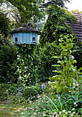Dovecot in wild garden outside ivy-covered house