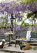Pleasant seating area with bench and table beneath wisteria-covered arbour