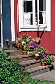 Plant pots on wooden stairs in front of a front door