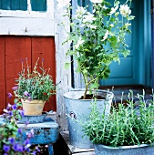 Herb pots in front of a rustic wooden house