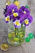 Violas in water glass with marbles