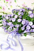 Bouquet of campanula in terrine