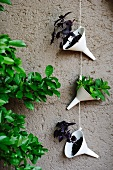 White plastic funnels hanging from string on house facade and planted with basil plants