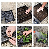 Yard work - planting a variety of plants in plastic containers