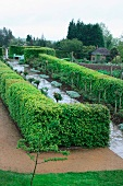 Garden patch surrounded by topiary hedges
