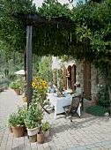 Tea on terrace with creeper-covered pergola adjoining Mediterranean country house