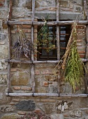 Bunches of dried herbs hanging on wooden lattice in front of rustico window