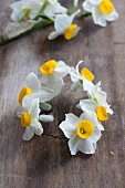 Making a circlet of white narcissus flowers