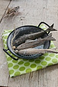 Fish ornaments in enamel pot