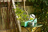 Table next to wooden fence in garden