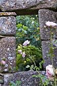 View through the garden wall