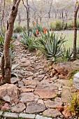 Gartenweg aus Steinen und Felsenbrocken mit blühender Aloe