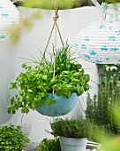 Fresh herbs in a hanging basket on a terrace