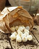 Garlic bulbs for planting on a garden table