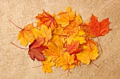Autumn acorn leaves