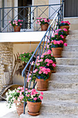 Stone steps with wrought iron balustrade and pots of pink geraniums