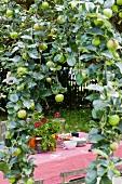 Gedeckter Tisch mit rosa Tischtuch unter Apfelbaum