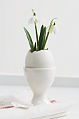 Snowdrops in Easter egg standing in egg cup