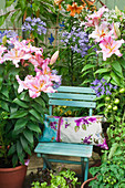 Blue garden chair on terrace surrounded by lilies, agapanthus and tomatoes