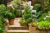 Flowering plants and vegetables in containers on terrace