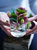 Blühenede Christrosen in einem Glas