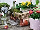 Verschiedene Frühlingsblumen im Korb und Blumentopf