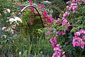 Romantic rose garden with rose arch, wild roses, climbing roses, shrub roses and stone wall in foreground
