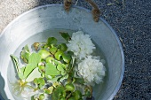 Water plants and peony flowers in a zinc tub