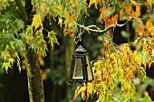 Kleine Laterne auf einem Ahornbaum