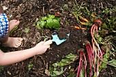 Small child gardening