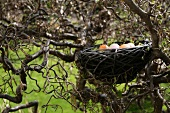 Easter nest containing colourful Easter eggs in tree