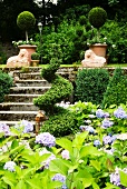 Summer garden on two levels with flowering hydrangeas and topiary box spiral