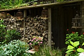 Stacked firewood and old bird cages outside garden shed